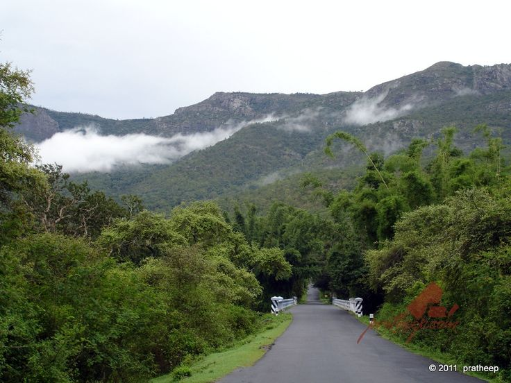 Masinagudi, a jungle retreat and that it is! Located on the foothills of the Nilgiri hills in Tamil Nadu.