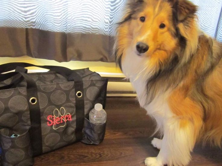 Zip-top organizing utility tote is perfect for your pet too!