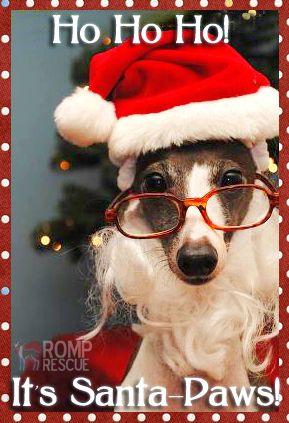 silly dog saying | dog holiday card, santa paws christmas card of dog dressed up in santa ..
