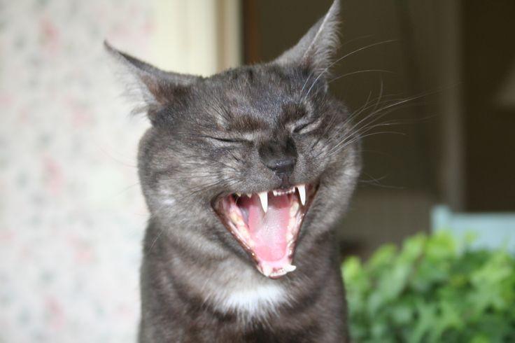 Giggling cat at Strandhagen