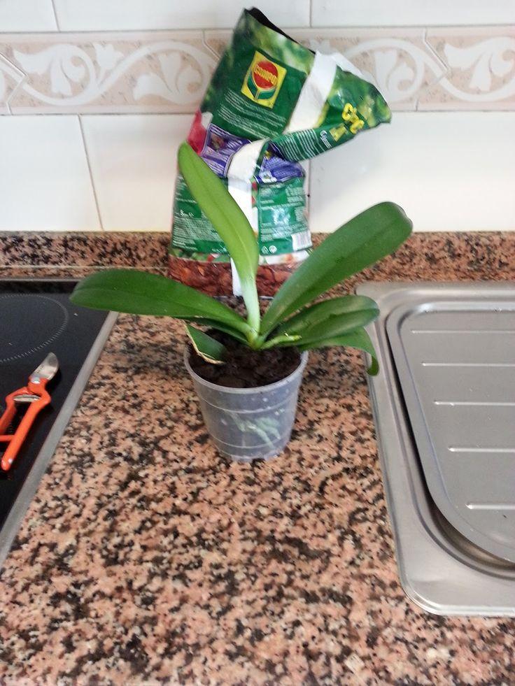 M s de 25 ideas incre bles sobre jardines tropicales en - Como cuidar una orquidea en casa ...
