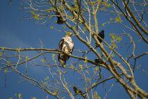 Eagle Plus 5_Sharp