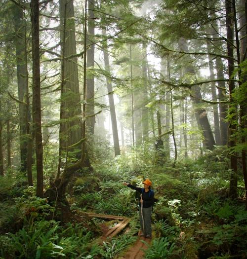Take a guided hike to Payzant Falls, Juan de Fuca Marine Trail!