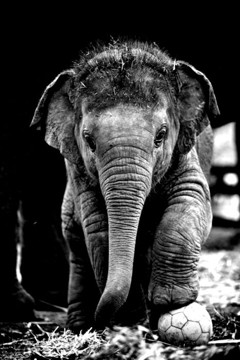 Elephants are the most majestic animals