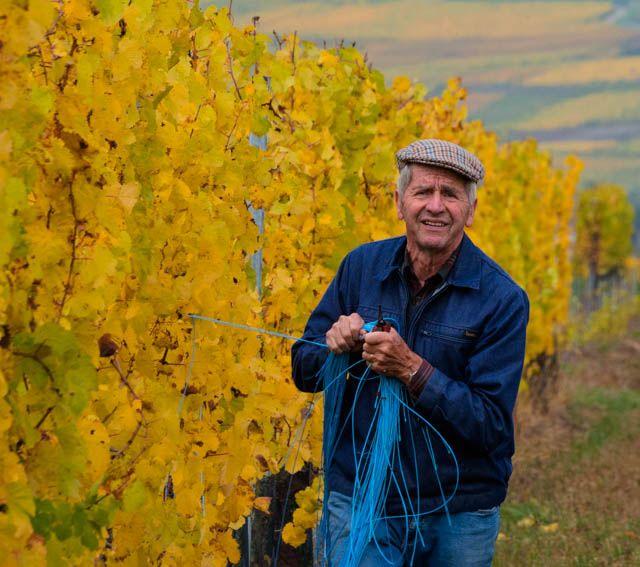 Galerie photo - Vins Bio d'Alsace - Domaine de l'Envol    Papy André  Grandpa works