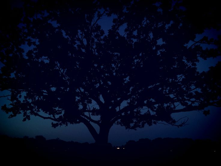 Tree at night at Richmond Park