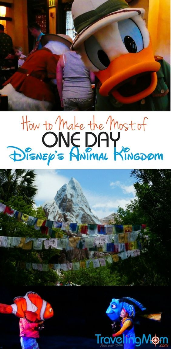 Can you do Disney's Animal Kingdom in one day? You bet! Just follow this itinerary on what to see, what to do and where to eat and you won't miss any of the highlights!