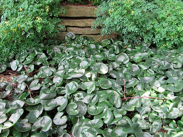 893 Best Ideas About Gardening In Shade Flowers Foliage