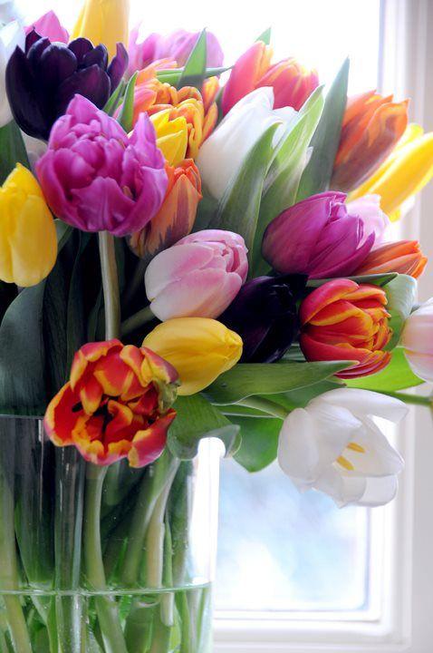 Wil je niet dat je tulpen gaan hangen in de vaas? Prik met een speld, net onder het bloemhoofdje door de stengel heen. Ze blijven mooi rechtop staan. P.s tulpen groeien door in de vaas. Dus neem niet een te kleine vaas.