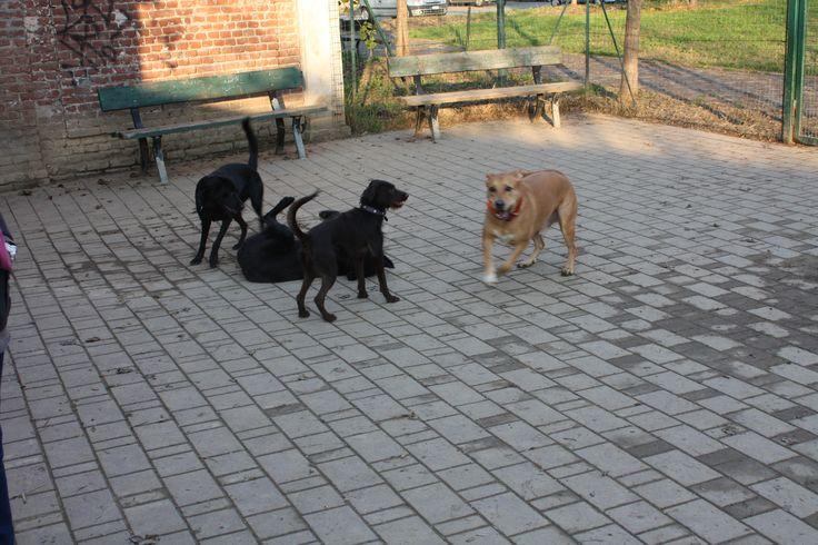 20/11/2014 - Torino con Peja, Peggy e Ollie