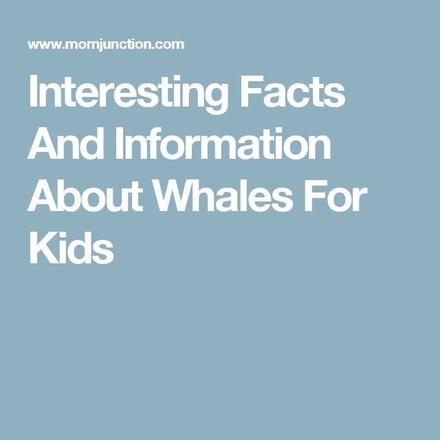 baleen whales essay Our gray whales: celebration of conservation mission is under way a gray whale is a baleen whalea killer whale is a toothed whalewhat's the difference find out in this fantastic oceanscape network video enjoy.