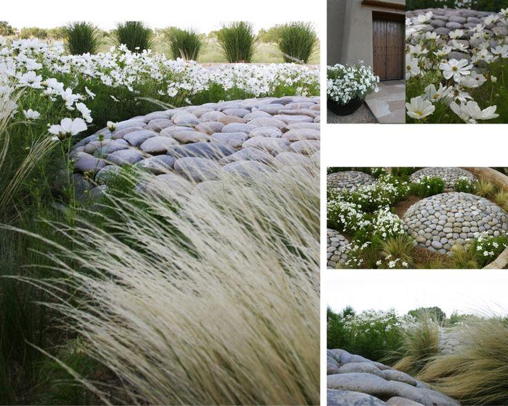 64 best arid landscape images on pinterest succulents for Modern grasses landscaping