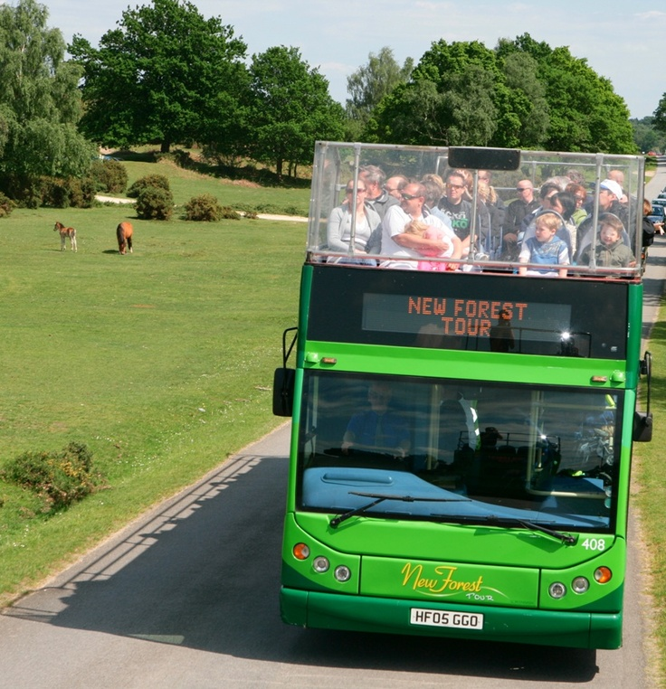 Explore the magical New Forest National Park from the comfort of the open top bus