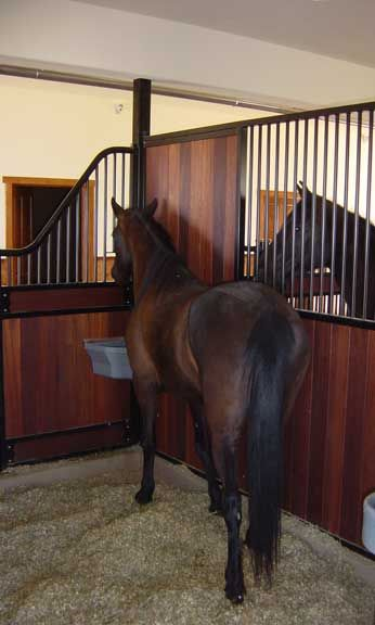 This Privacy Panel Stall Partition From Innovative Equine Systems Allows Each Horse To Eat Without Being