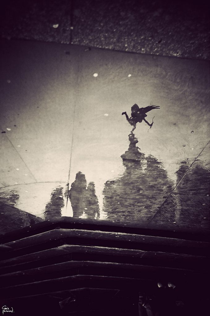 London | Piccadilly Circus in a puddle 2 | Gavin Hammond - Black outdoor