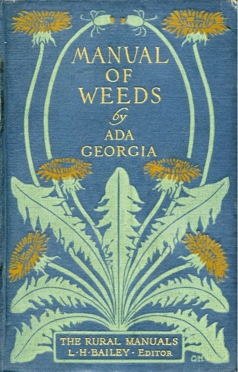 """manual of Weeds by Ada Georgia.  the rural manuals L H BAILEY editor .  A magnificent dandelion by """"Ott"""""""
