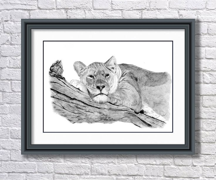 Lioness Print from an Original Graphite Drawing, Lioness Drawing, Lioness Print, Wildlife Print, Lioness Greeting Card, Lioness Notecard by SBsPrintables on Etsy