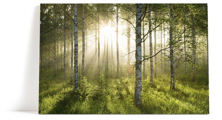 Bjørkeskogen Lerret