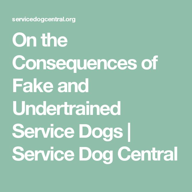On the Consequences of Fake and Undertrained Service Dogs | Service Dog Central