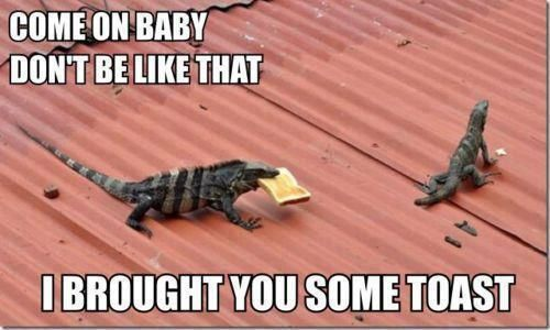 cute..Laugh, Funny Animal Pictures, Funny Pictures, Funny Stuff, Humor, Toast, Lizards, Funny Memes, Animal Memes
