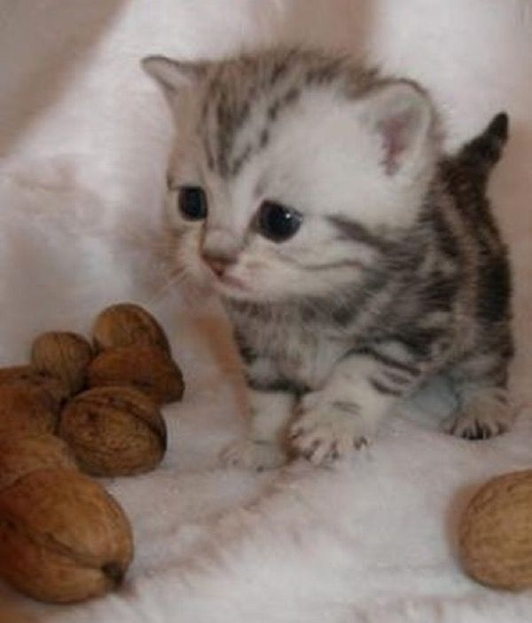 I'm just nuts over this little kitten