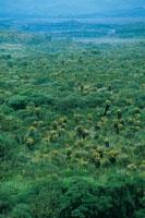 La vegetación de matorrales y el pajonal frailejonal se entremezclan en el altiplano del Paletará.