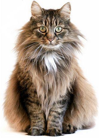 Royal Canin -полноценное питание для кошек