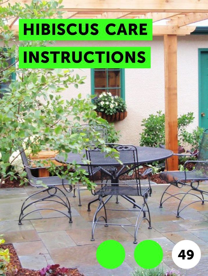 Hibiscus Care Instructions Growing Plants Planting Grass Garden