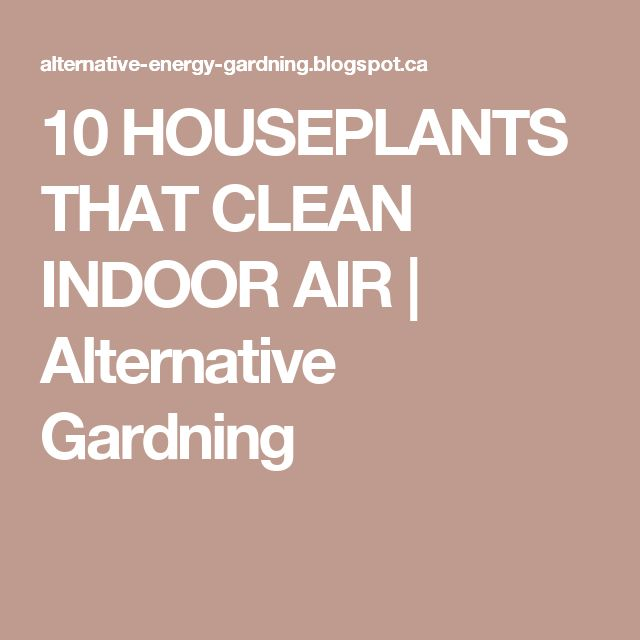 10 HOUSEPLANTS THAT CLEAN INDOOR AIR | Alternative Gardning