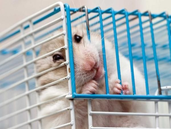 2196ecd523aec061bea01cc59b58db8a - How To Get My Hamster To Stop Biting His Cage