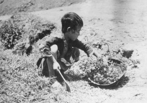 """Un niño chino recoge hierba seca mientras busca comida durante el Gran Salto Adelante hambruna.  1959-60s Provincia de Hunan, China [[MÁS]] El título original era aparentemente: """"El pequeño Tai Lo-ping de 10 años es el único sostén familiar, ya que él es ..."""