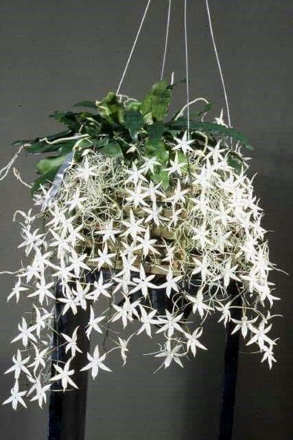 44 besten besondere pflanzen bilder auf pinterest g rtnern exotische blumen und exotische. Black Bedroom Furniture Sets. Home Design Ideas