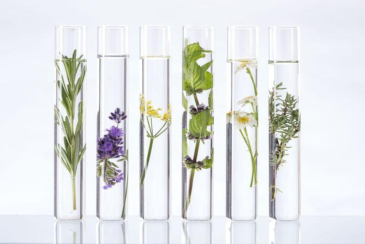 Cómo se diferencia un aceite esencial de uno vegetal