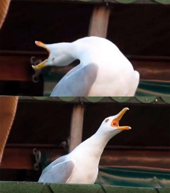 Crea tus memes de La Gaviota facilmente con el generador de memes de Pintzap