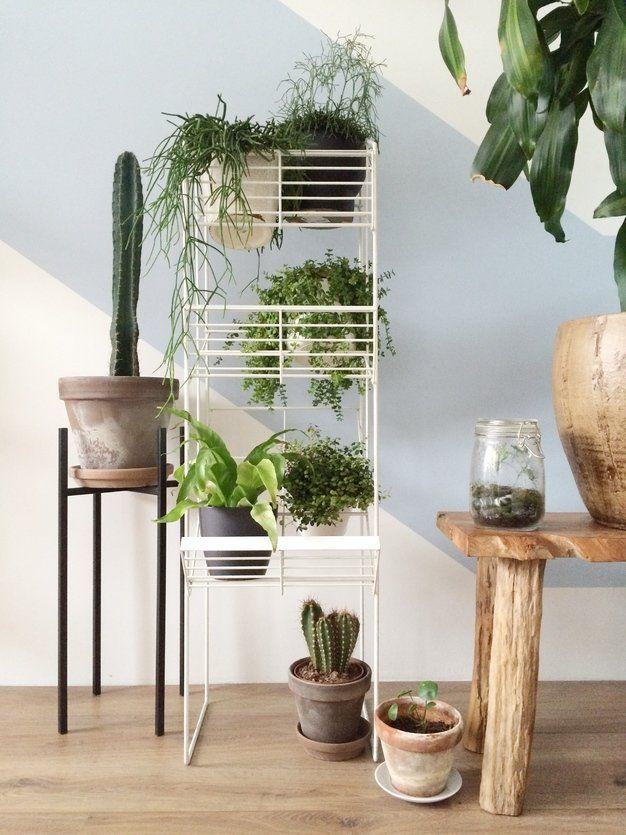 urban jungle junglevibes by houseof kar beautiful green plants
