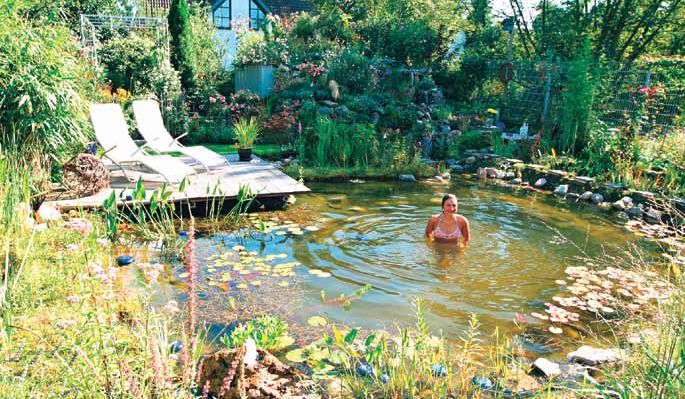 Natural pool cost natural swimming pools and ponds natural swimming pools ponds pinterest - The pond house nature above all ...