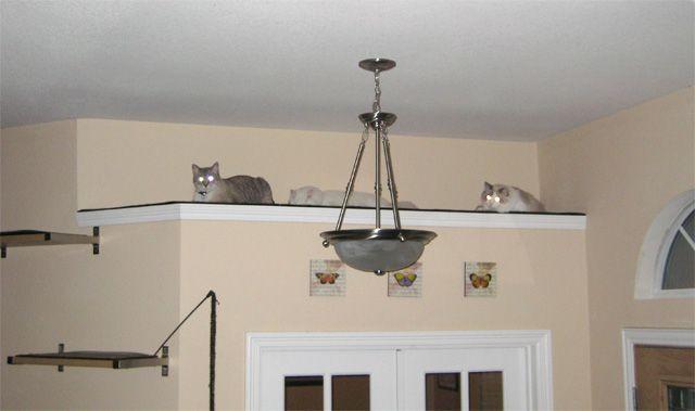 Catification: Creating a Cat Loft