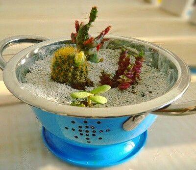 Mini jardín de cactus y suculentas