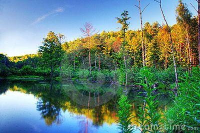 Beaver pond at sunset