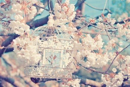 x flowers tumblr