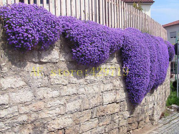 100 unids Roca Berros, Aubrieta Cascada CUBIERTA VEGETAL PERENNE semillas de flor de maceta plantadores wift como regalo