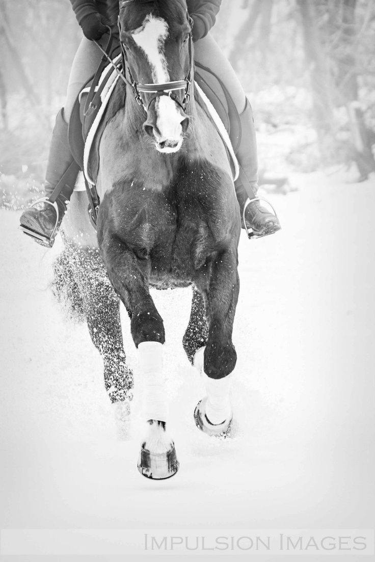 riding horses in the snow