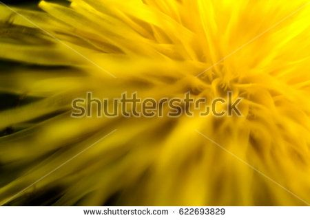 Close up dandelion flower detail. Soft blurry look. Soft nature background