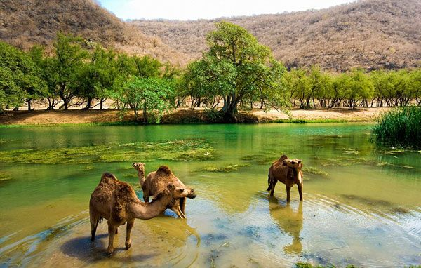 "Corfu Weather & News: H ""ζούγκλα"" της Αραβίας που πρασινίζει 3 μήνες τον χρόνο! Salalah Khareef or Salalah Monsoon, Oman, turns green for only 3 months a year. (June-Sept)"
