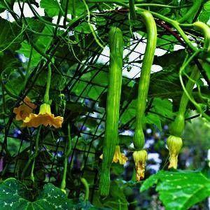 Lovely How to Build Vertical Garden Vegetables
