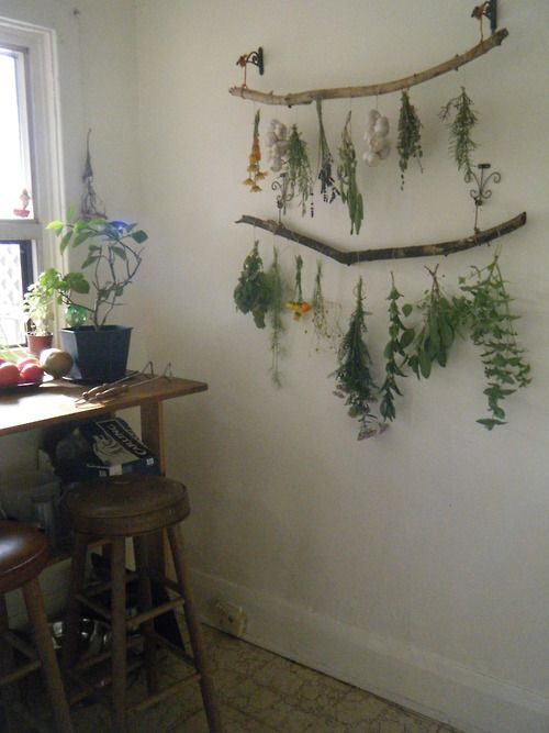 tulullabelle:  my new drying set up! slowly harvesting the herb...