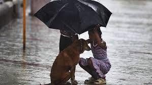 Menina usa seu guarda-chuva para proteger um cão