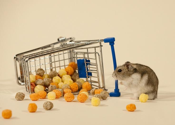 Tierfoto mit einem Mini Hamster für Werbezwecke   von AlexandraD Fotografie aus Rüsselsheim