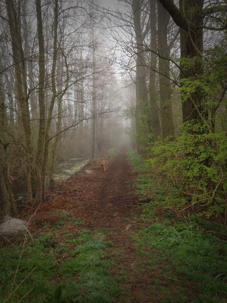 Misty Woods by MvdBoom