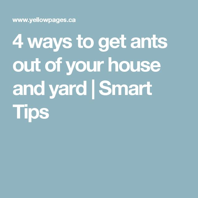 how to kill wood ants